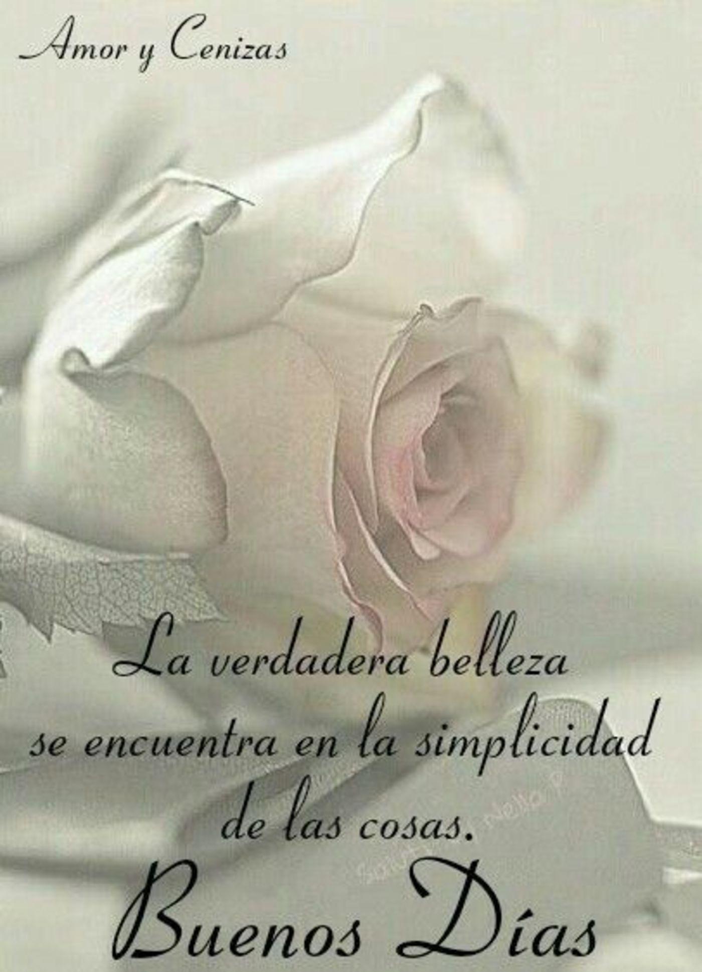La verdadera belleza se encuentra en la semplicidad de las cosas. Buenos días