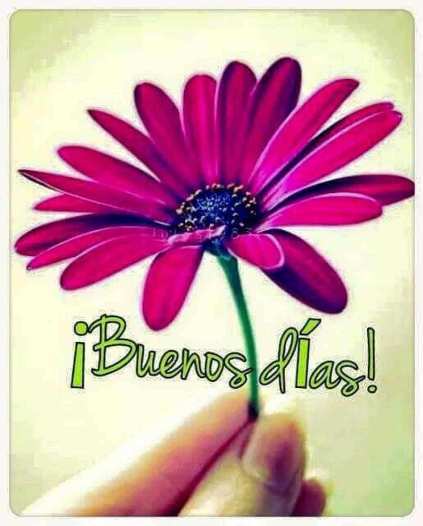 Buenos Días con flores