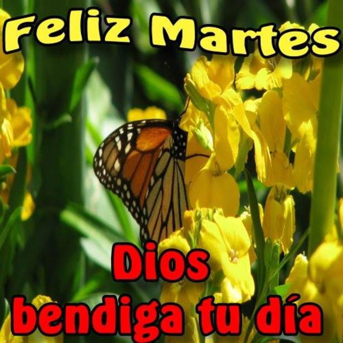 Feliz Martes Dios bendiga tu día
