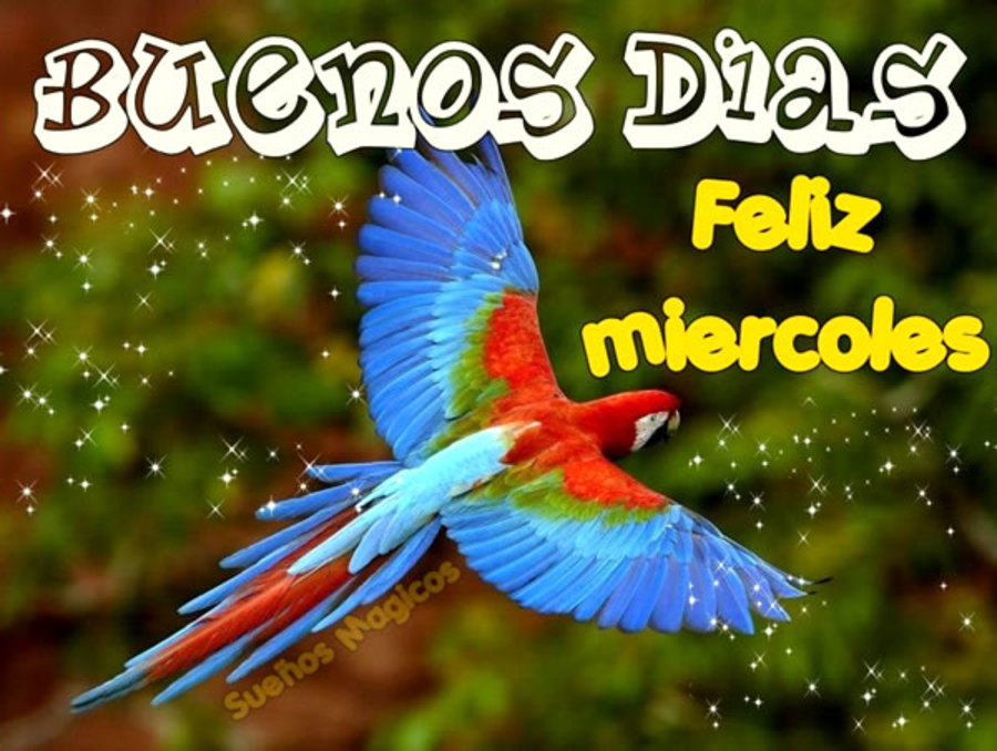 Buenos Dias Feliz Miércoles