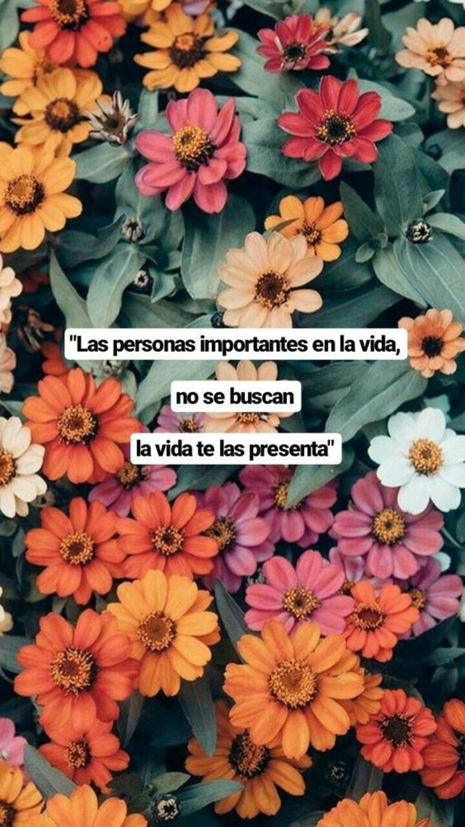 Las personas importantes en la vida, no se buscan la vida te las presenta