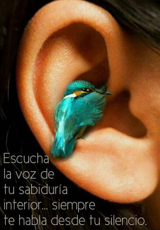 Escucha las voz de tu sabiduría interior...siempre te habla desde tu silencio
