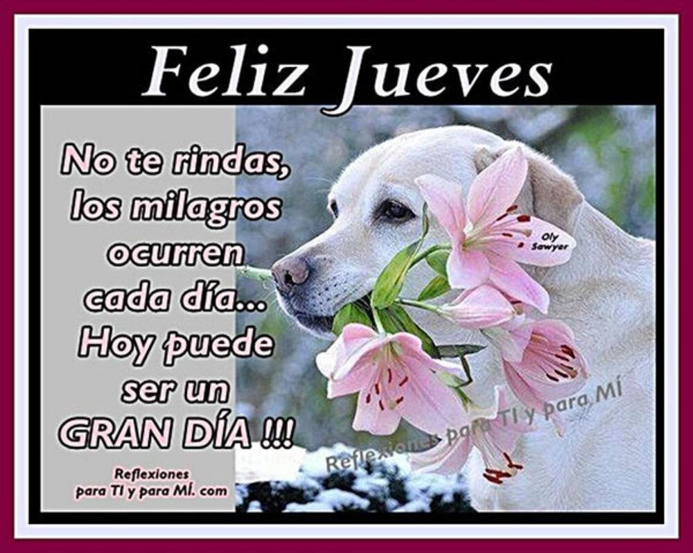 Feliz jueves no te rindas, los milagros ocurren cada día...hoy puede ser un gran día!!!