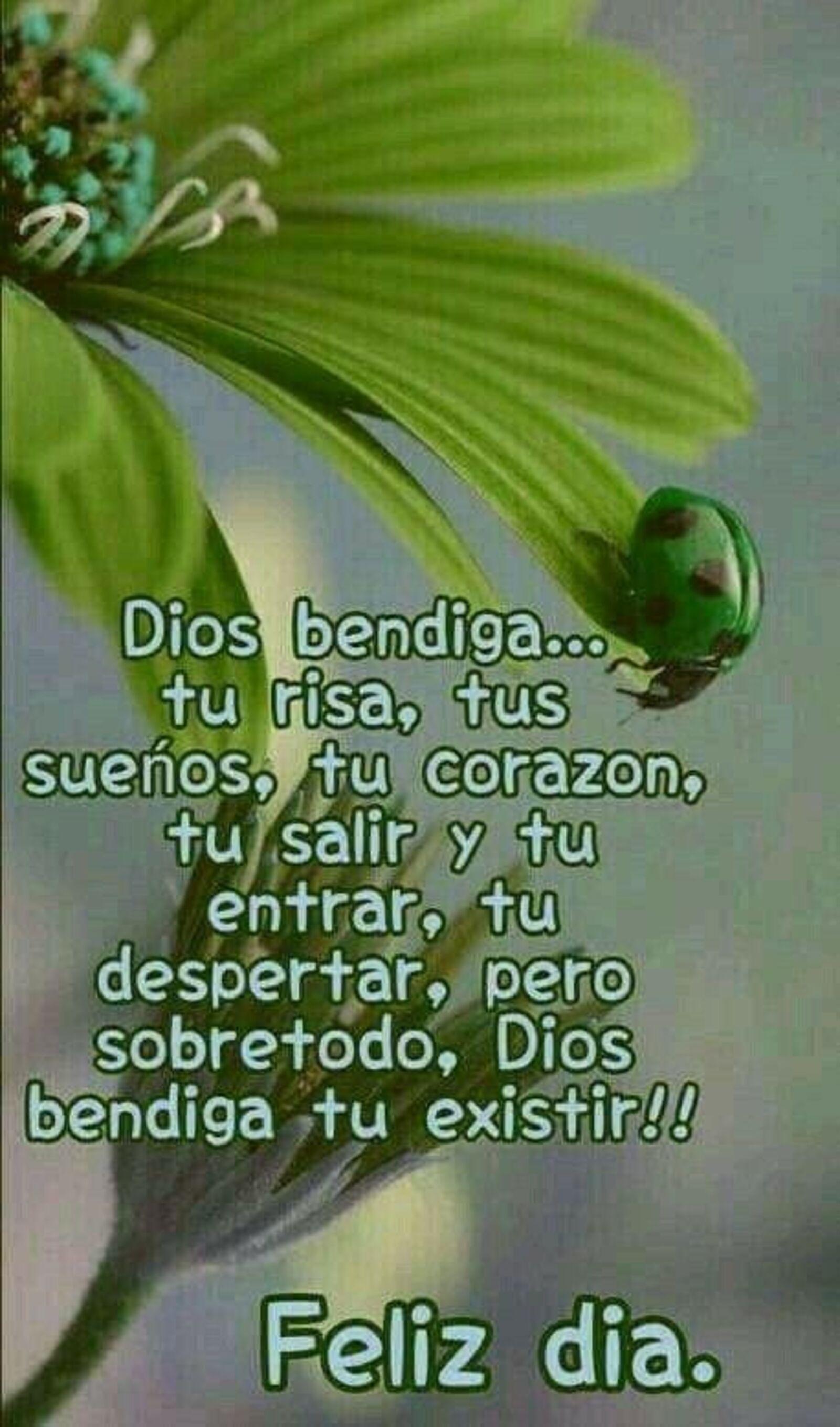 Dios bendiga...tu risa, tus sueños, tu corazón, tu salir y tu entrar, tu despertar, pero sobretodo, Dios te bendiga tu existir!! Feliz día