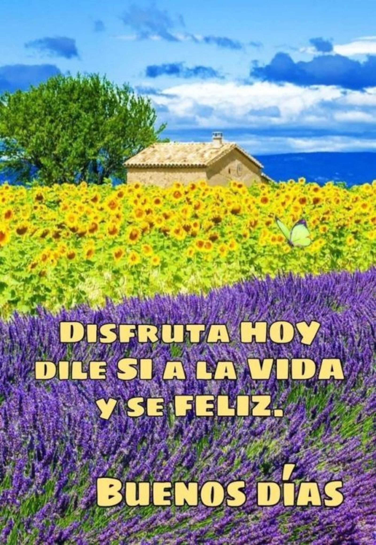 Disfruta hoy dile si a la vida y se feliz. Buenos días