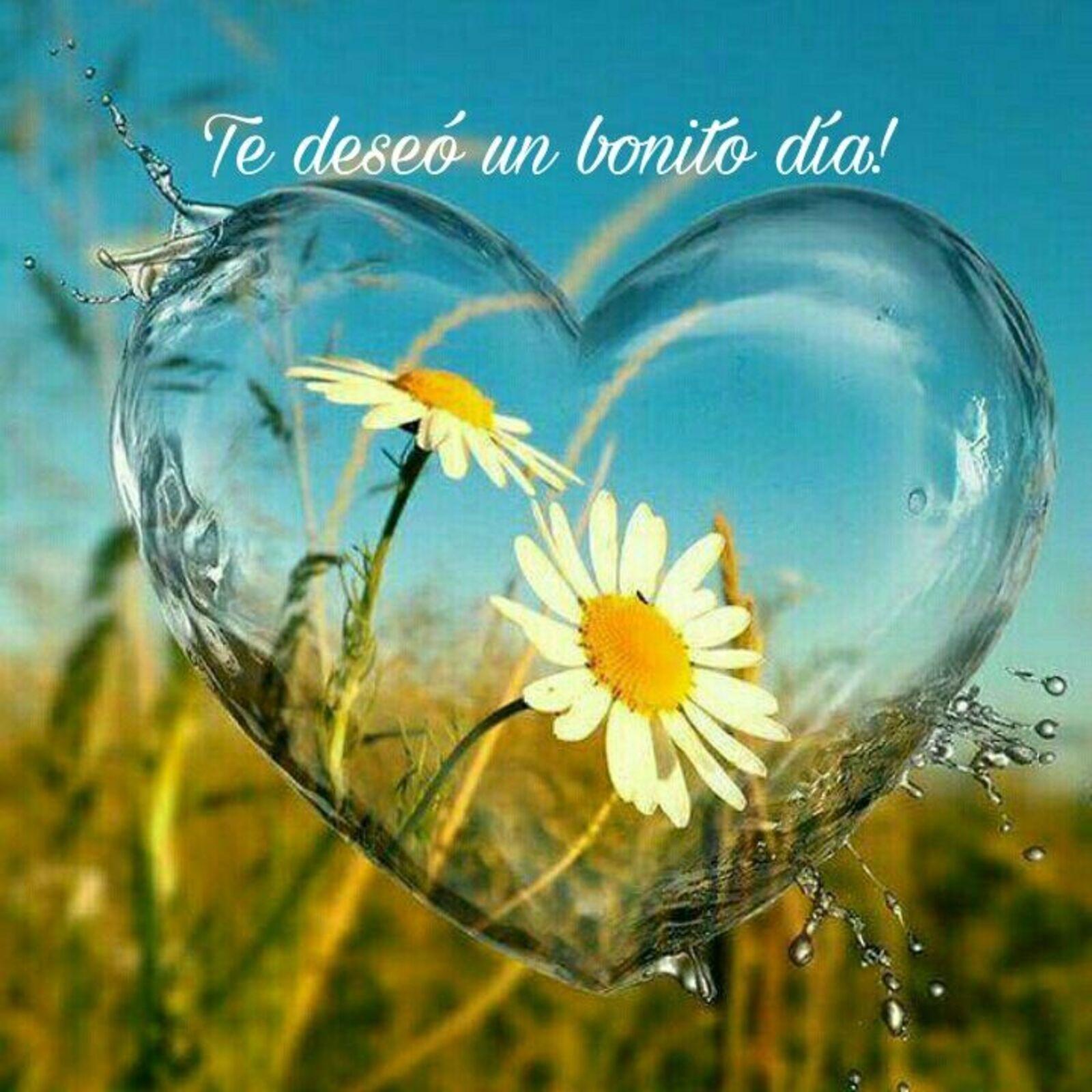 Te deseo un bonito día