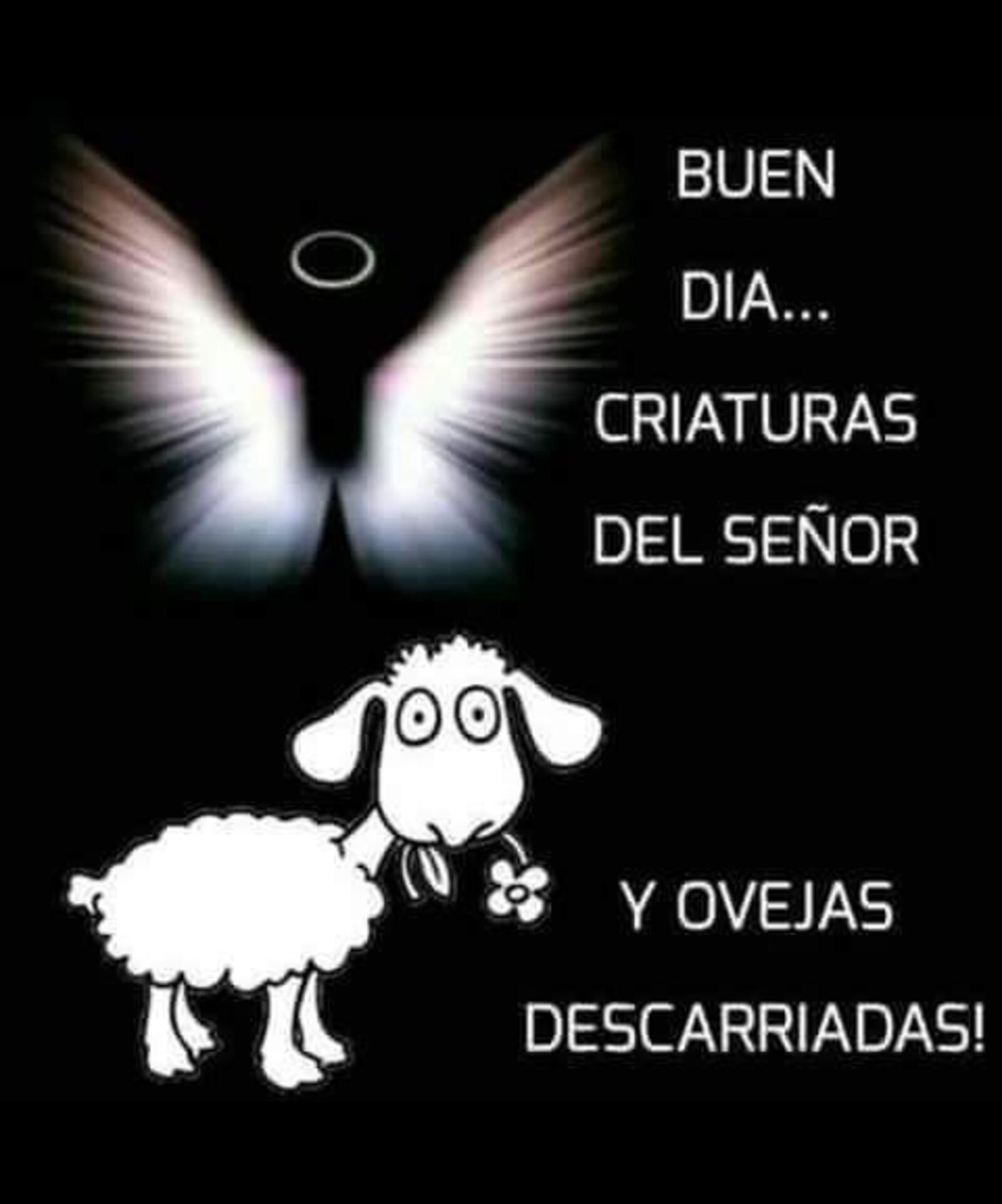 Buen día...criaturas del Señor y ovejas descarriadas!