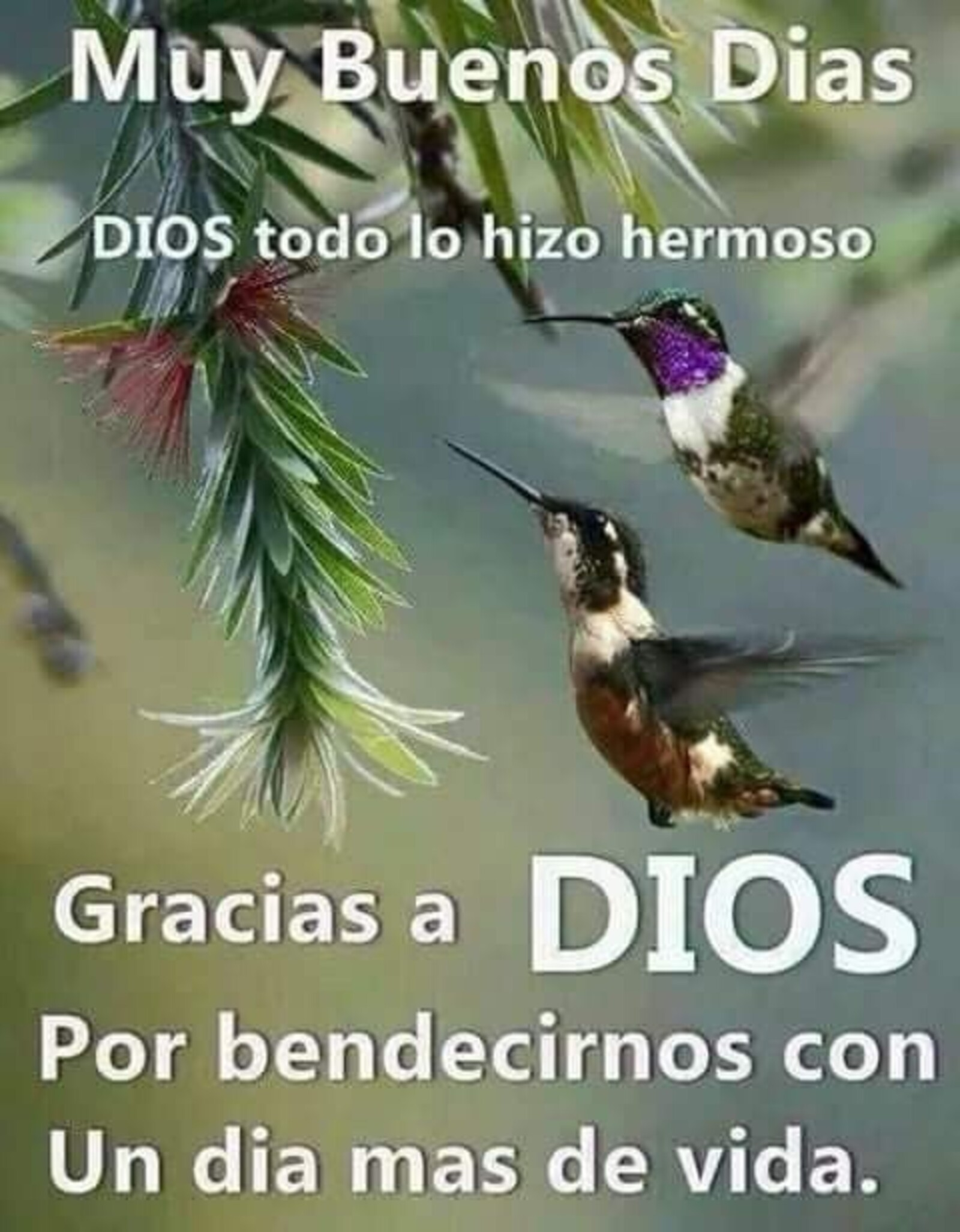 Muy buenos días, Dios todo lo hizo hermoso...gracias a Dios por bendercinos con un día más de vida