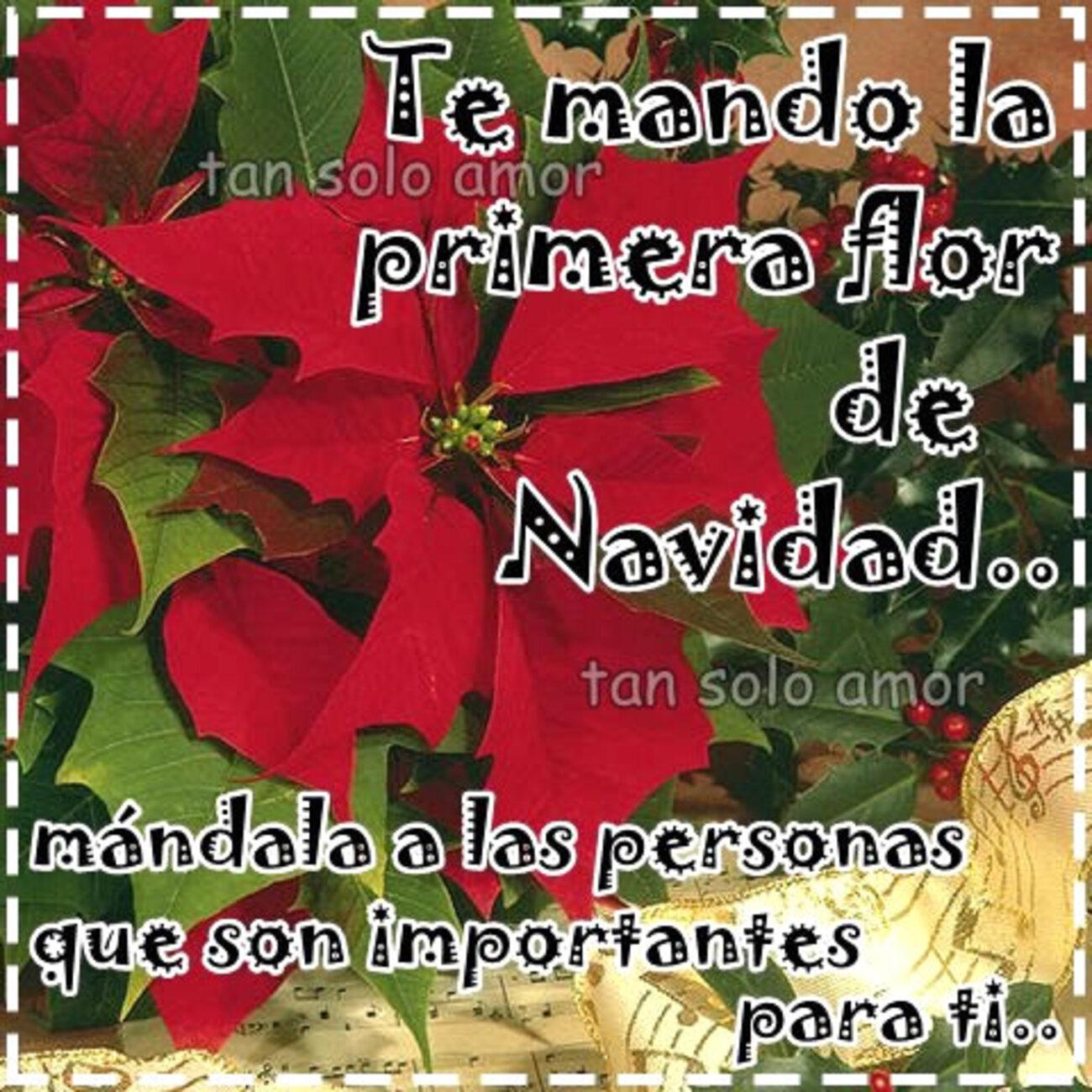 Te mando la primera flor de Navidad...mandala a las personas que son importantes para ti..