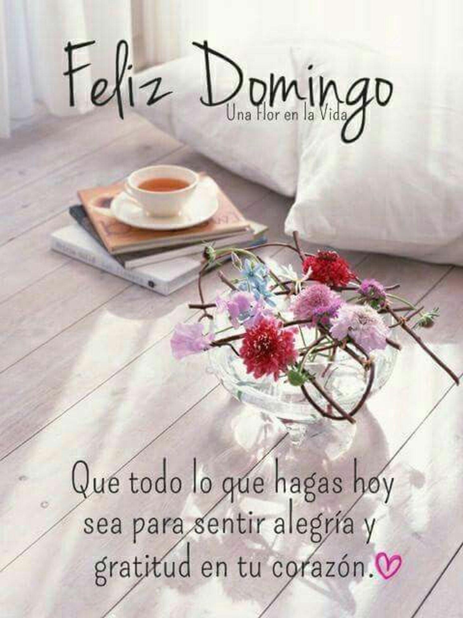 Feliz domingo que todo lo que hagas hoy sea para sentir alegria y gratitud en tu corazon