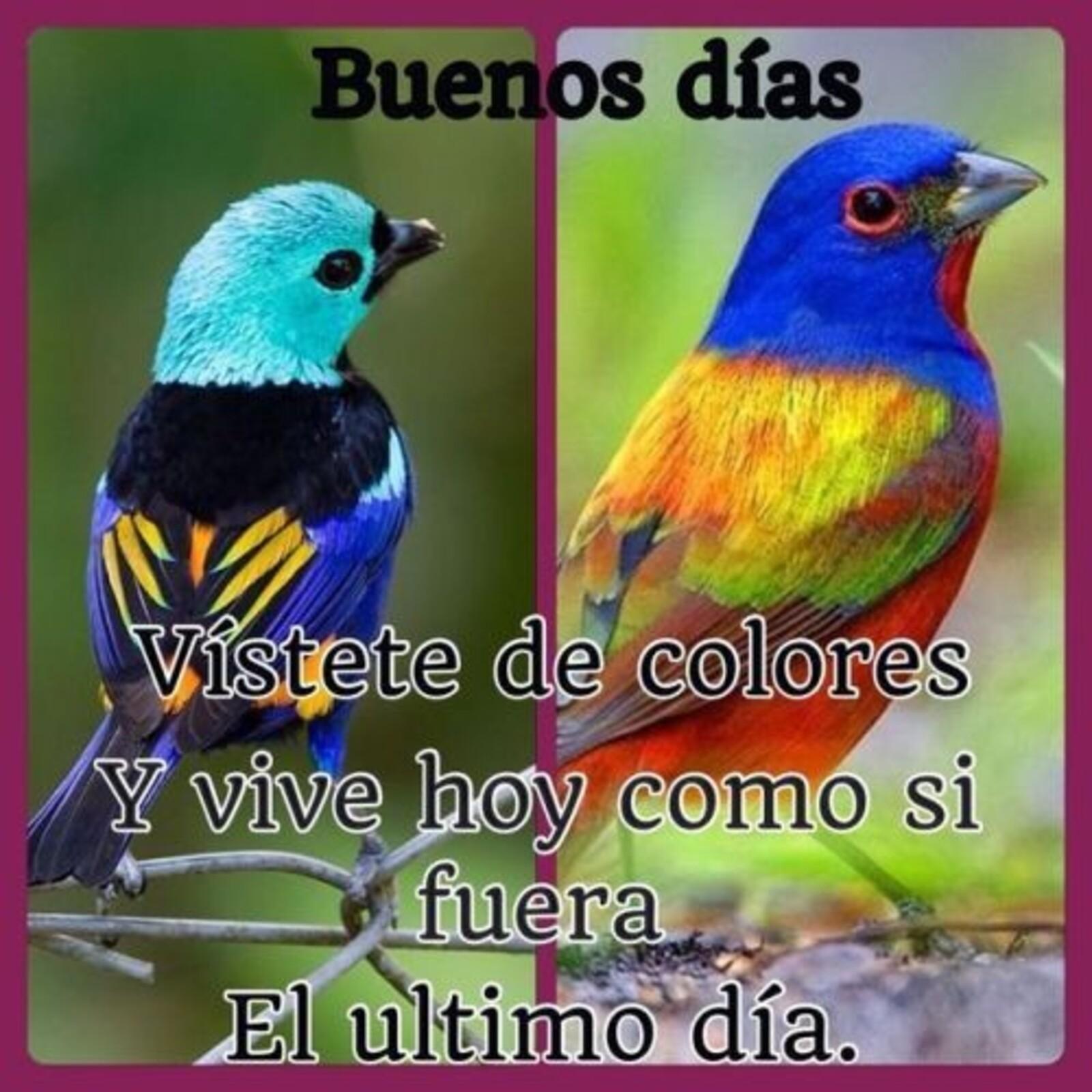 Buenos días. Vistete de colores y vive hoy como si fuera el ultimo día.