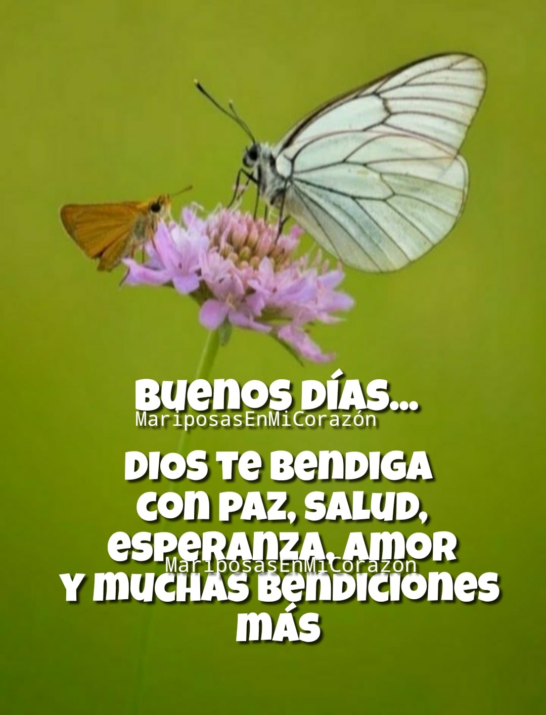 Buenos Días... Dios te bendiga con paz, salud, esperanza, amor y muchas bendiciones más.